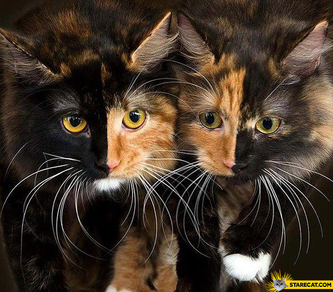 Cats almost like in a mirror