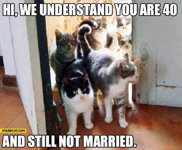 Cats hi we understand you are 40 and still not married