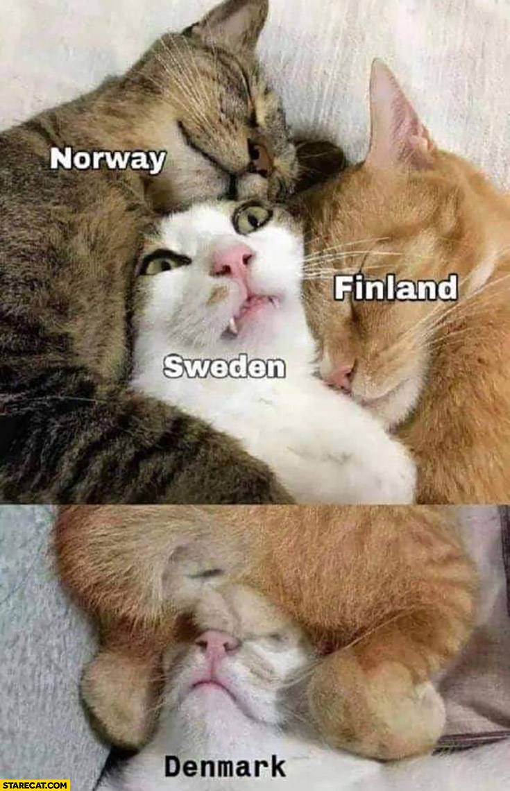 Cats hugging Norway Sweden Finland Denmark at the bottom balls on face