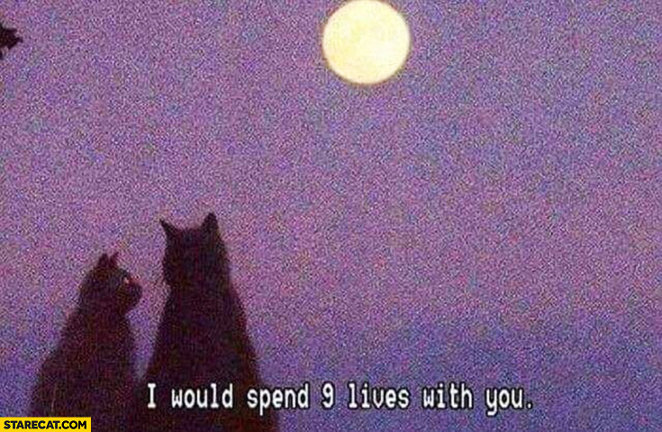 Cats: I would spend 9 lives with you