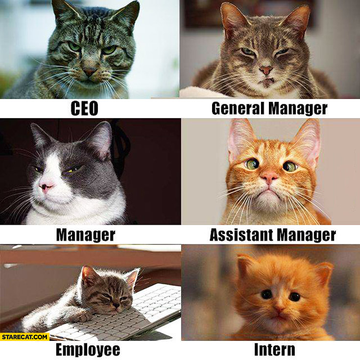 Cats in a company: CEO, general manager, assistant manager, employee, intern