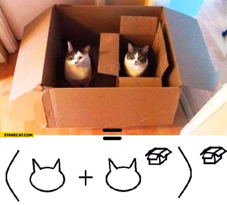 Cats in boxes pure math equation
