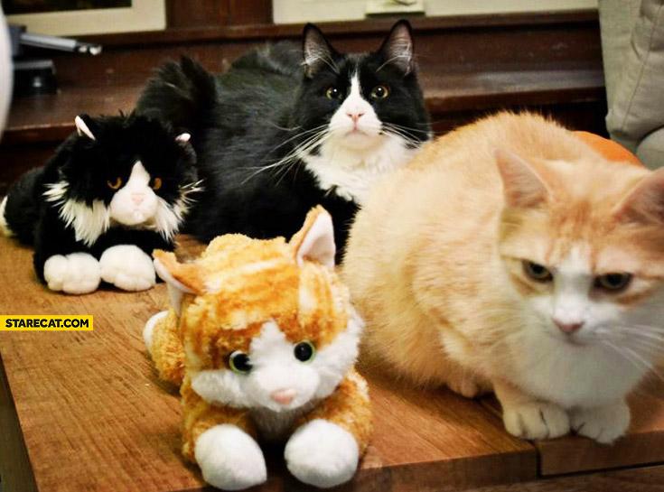 Cats mascots