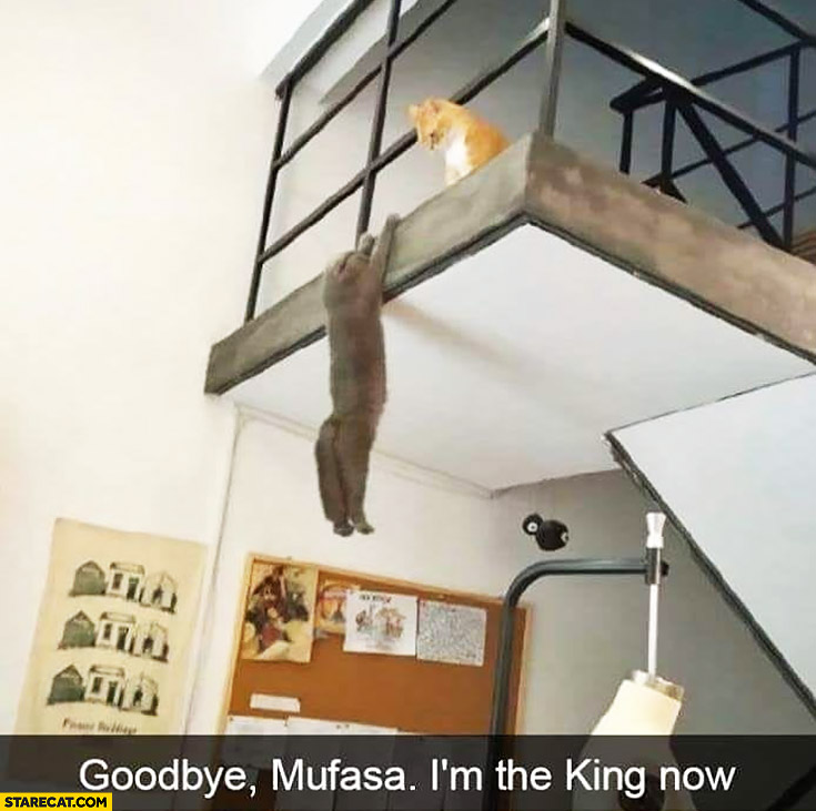 Cats playing Lion King scene goodbye Mufasa I'm the king now
