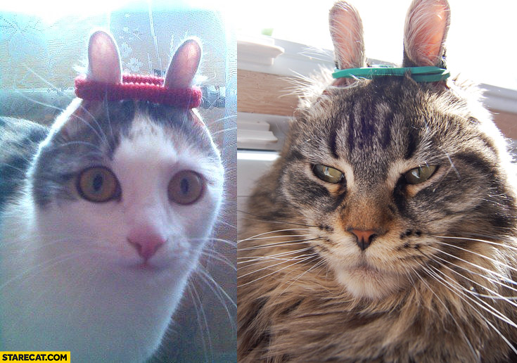 Cats ribbon ears bunnies