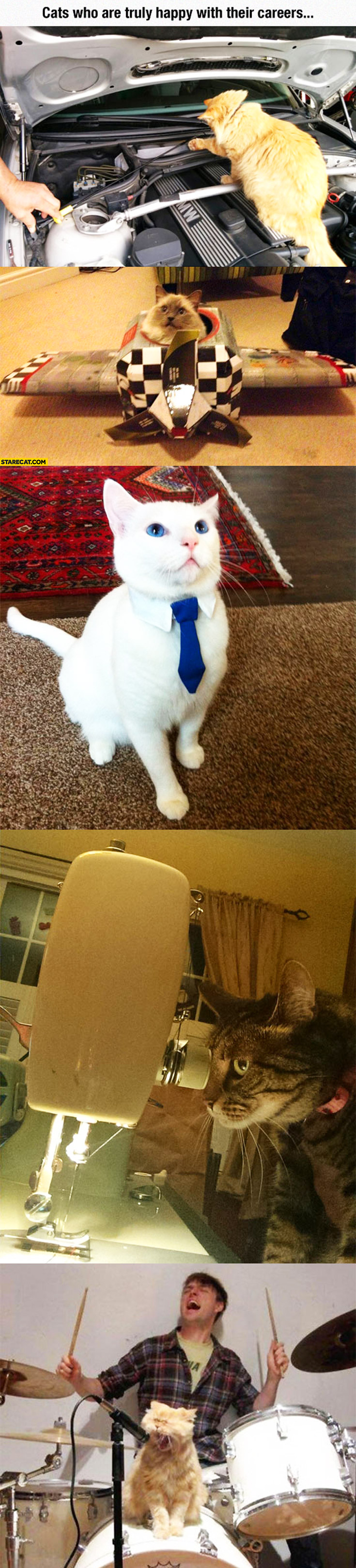 Cats who are truly happy about their careers