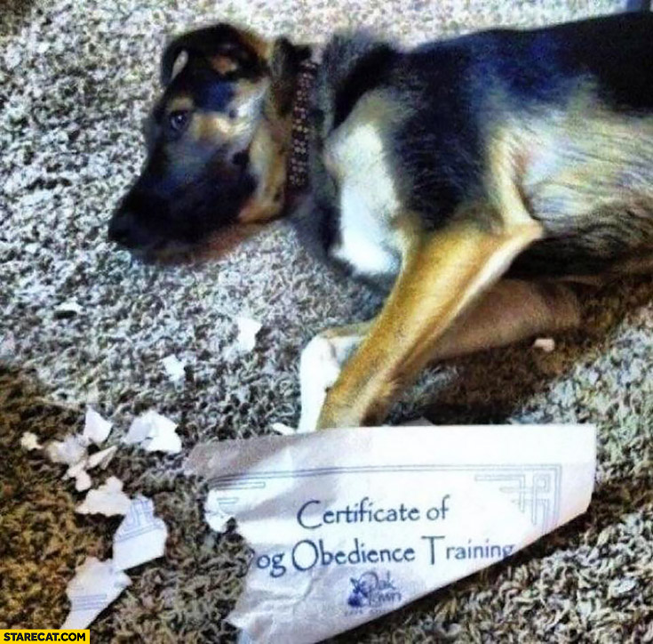 Certificate of dog obedience training eaten shreds dog fail