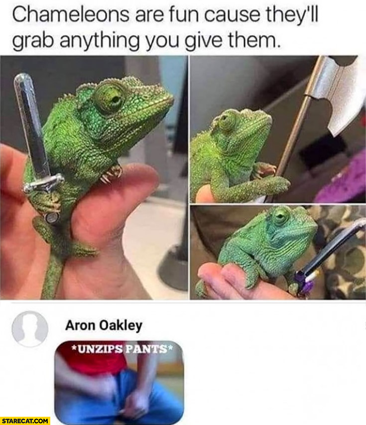 Chameleons are fun cause they'll grab anything you give them, me: unzips pants
