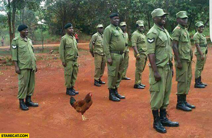 Chicken hen in African Nigerian army