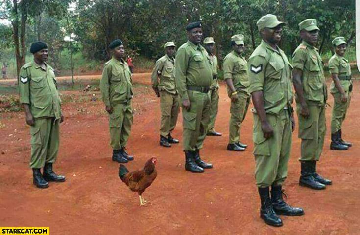 Chicken hen in African Nigerian army