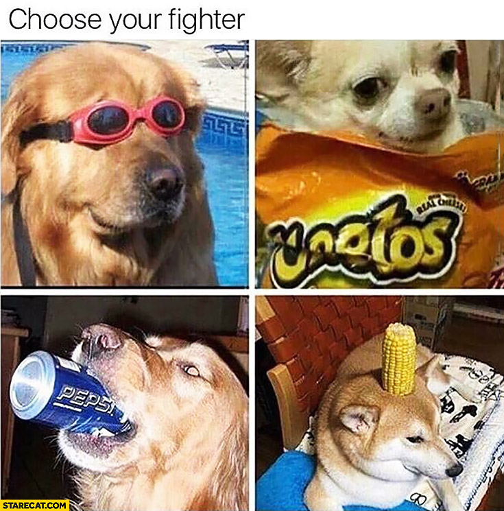 Choose your fighter silly dogs | StareCat.com