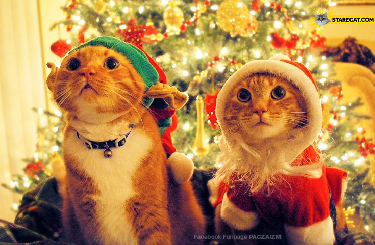 Christmas hats cats