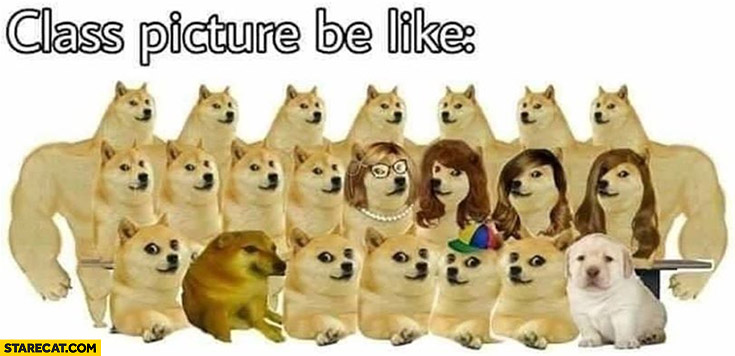Class picture be like dogs doge meme