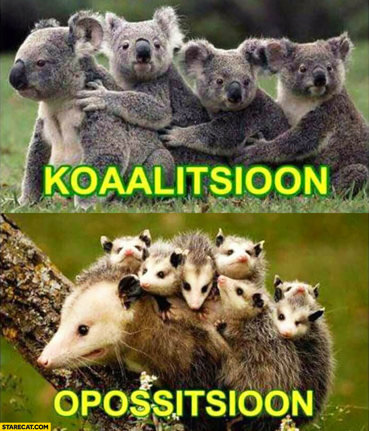 Coalition opposition koala bears animals