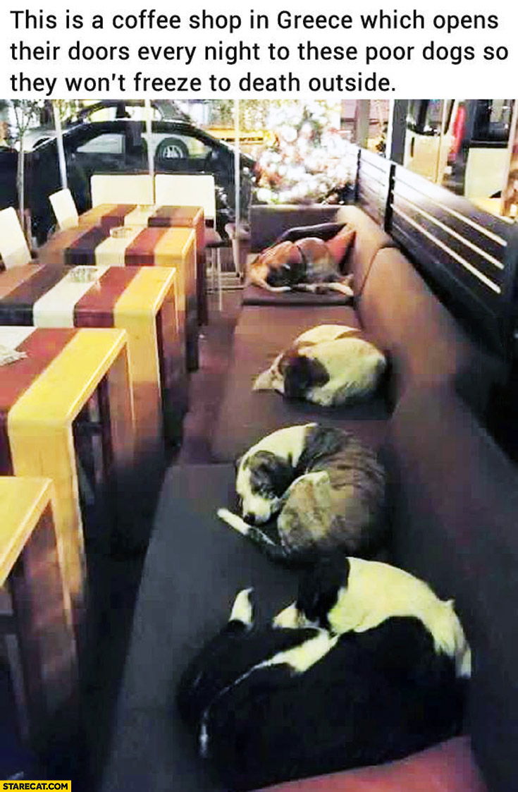 Coffee shop in Greece opens their dors every night to dogs so that they wont freeze to death outside