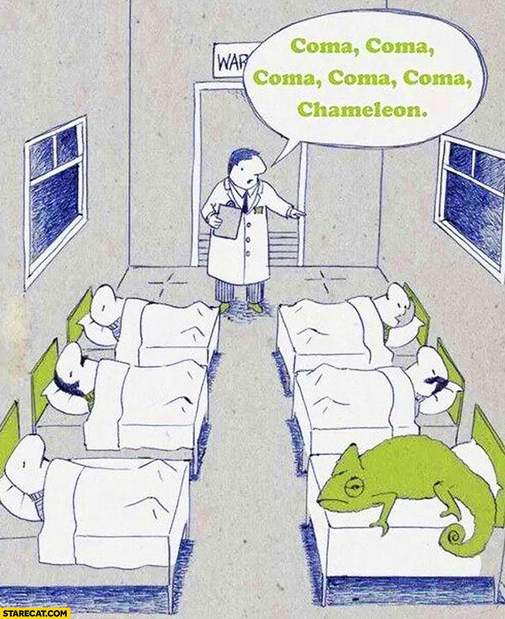 Coma coma chameleon