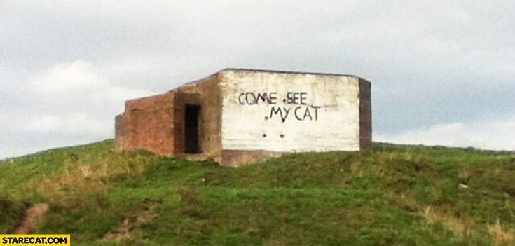 Come see my cat written on a building