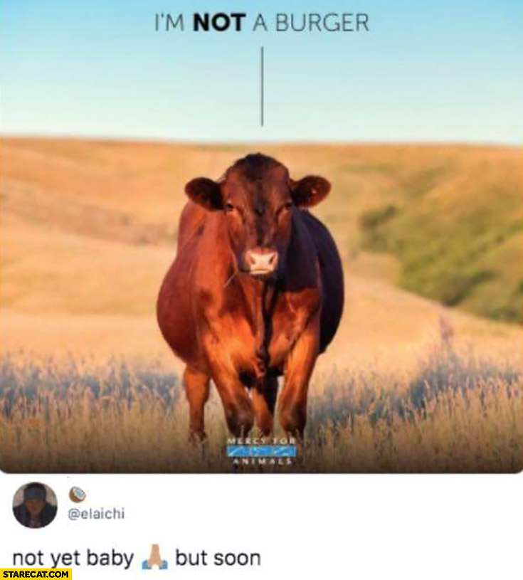 Cow I'm not a burger comment not yet baby but soon