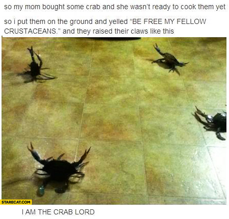 Crabs be my fellow crustaceans I am the crab lord