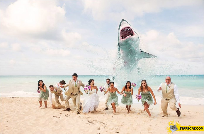 Creative wedding photo beach shark attack
