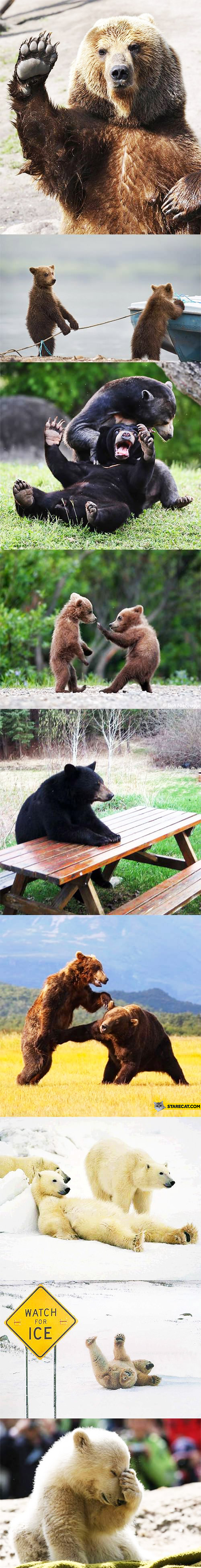 Cute bears funny pictures photos