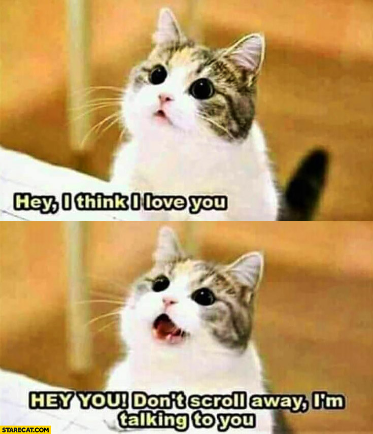 Cute cat hey I think I love, you hey you don't scroll away I'm talking to you