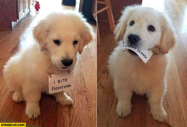 Cute dog puppy I bite everything bites paper sign