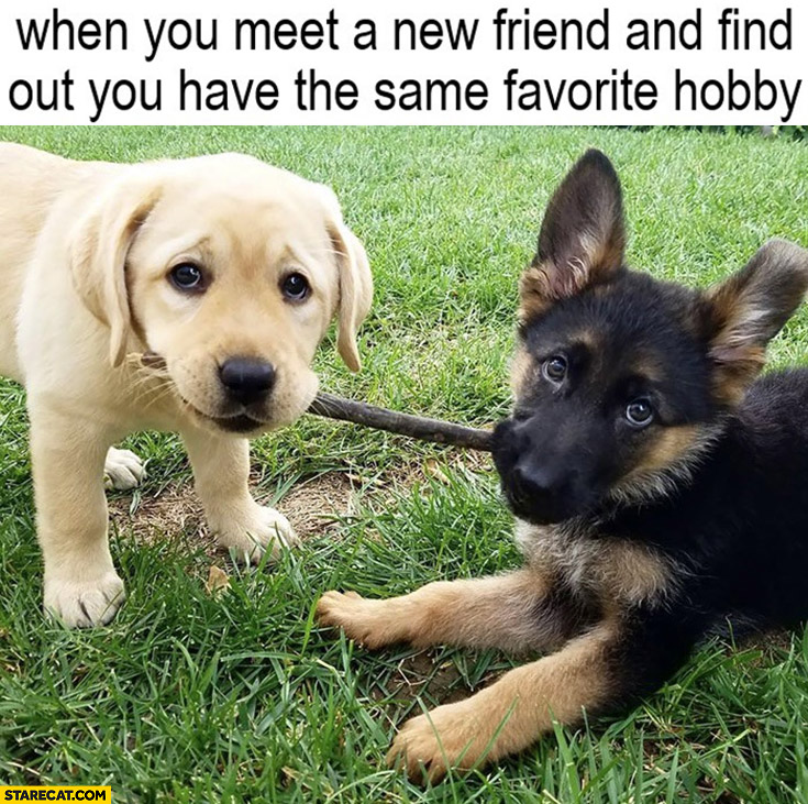 Cute dogs puppies when you meet a new friend and find out have the same favorite hobby stick