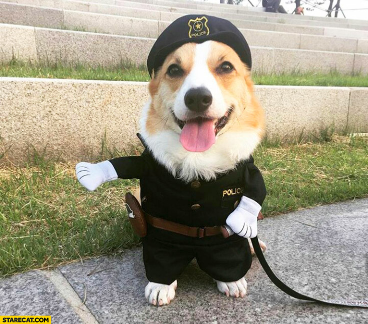 Cute funny dog wearing police officer uniform
