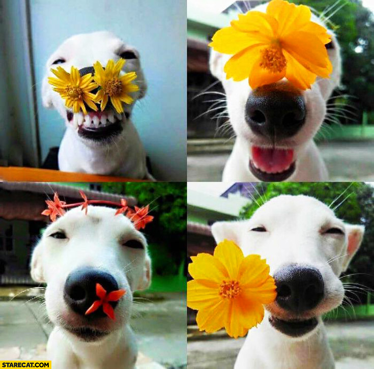 Cute happy puppy with flowers