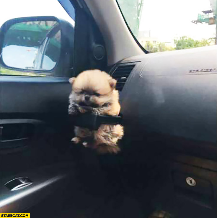 Cute puppy in a car cupholder pupholder