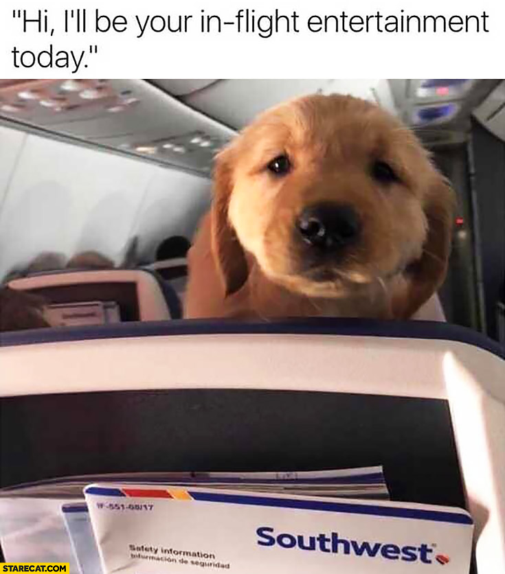 Cute puppy onboard airplane: Hi, I'll be your in-flight entertainment today