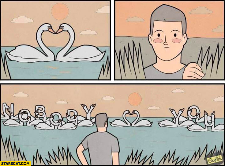 Cute swans showing nobody loves you text