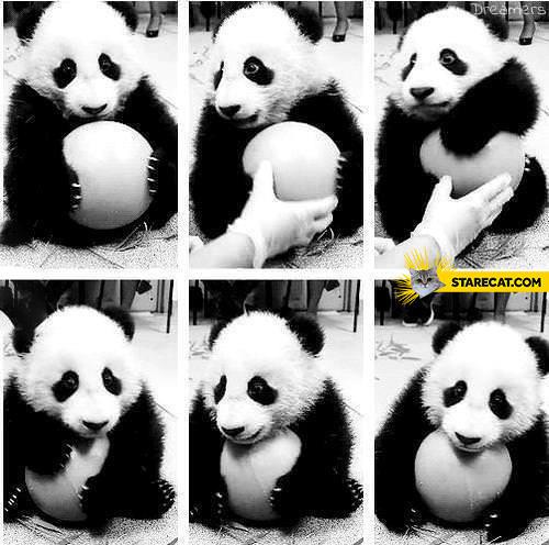 Cute sweet panda holding a ball