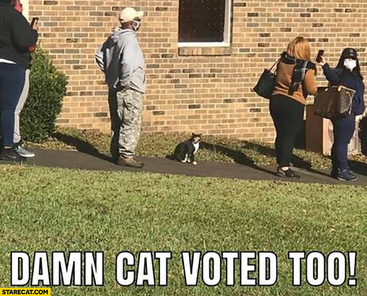 Damn cat voted too