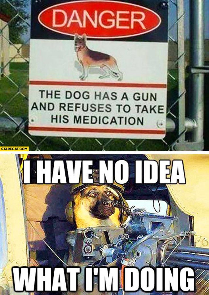 Danger the dog has a gun and refuses to take his medication. I have no idea what I'm doing