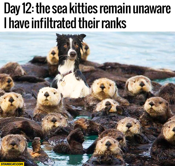 Day 12 the sea kitties remain unaware I have infiltrated their ranks dog otters