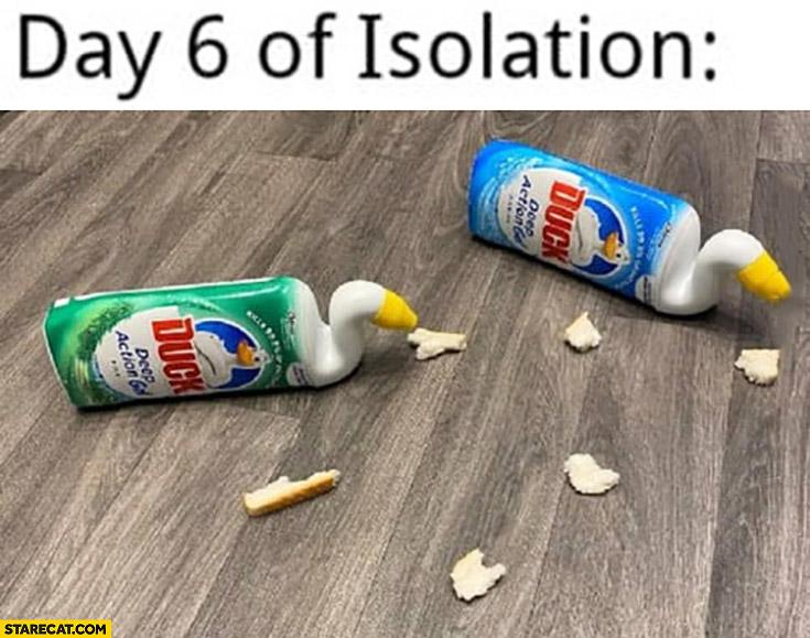 Day 6 of isolation ducks made of toilet duck bottles
