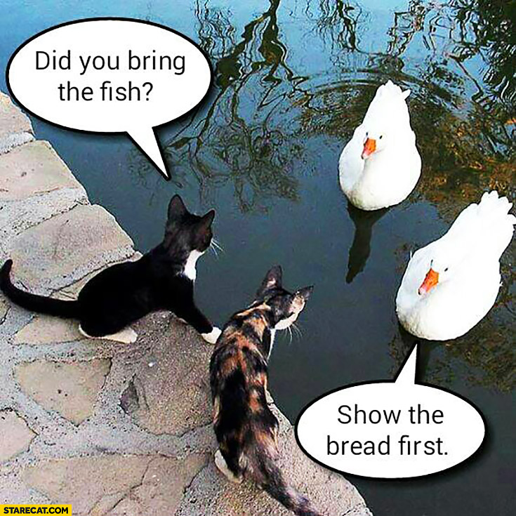 Did you bring the fish? Show the bread first. Cats dealing with swans