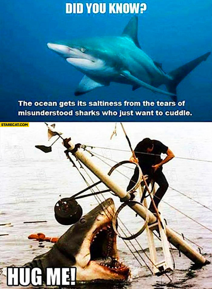 Did you know ocean gets its saltiness from the tears of misunderstood sharks who just want to cuddle? Hug me