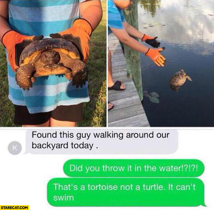 Did you throw it in the water? That's a tortoise not a turtle, it can't swim