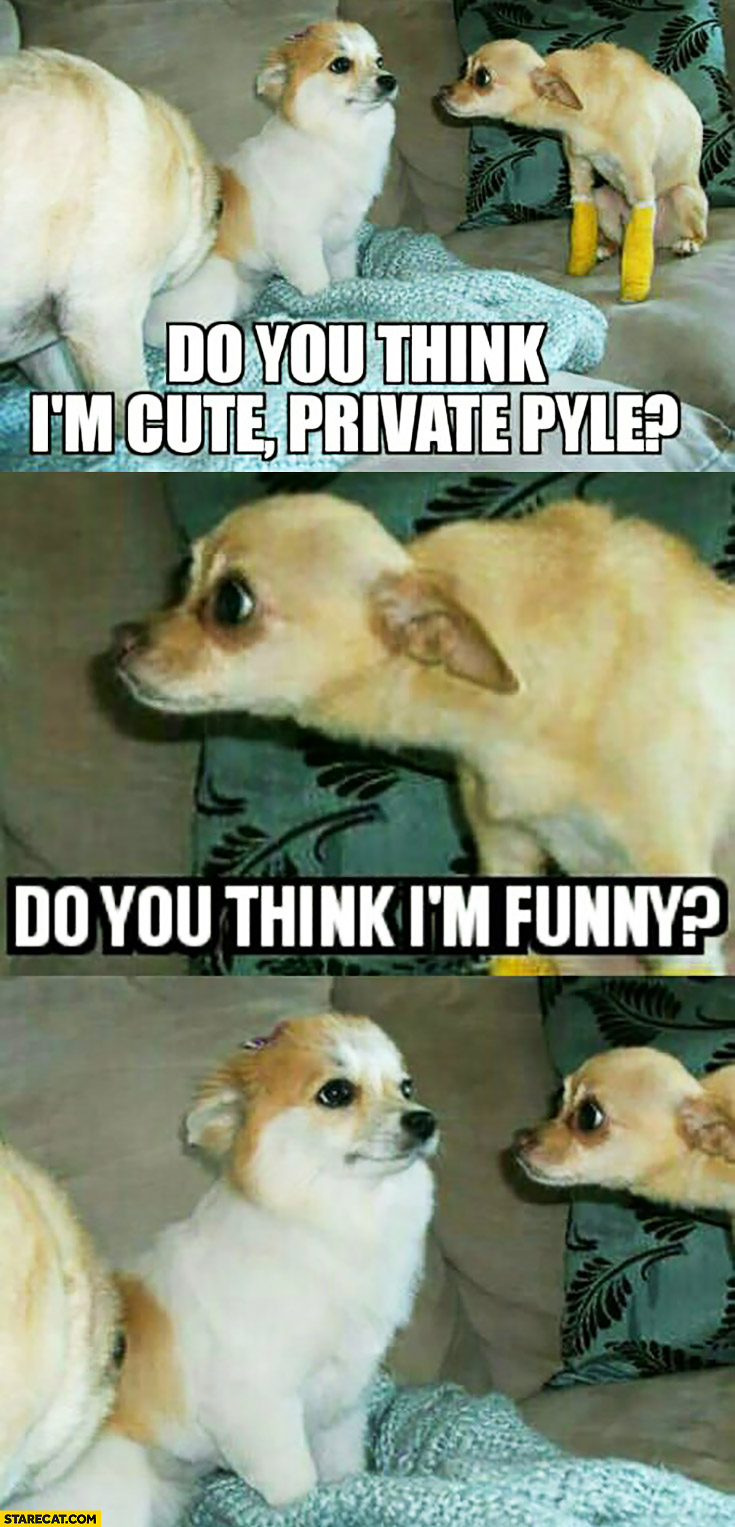 Do you think I'm cute private Pyle? Do you think I'm funny? dogs in army