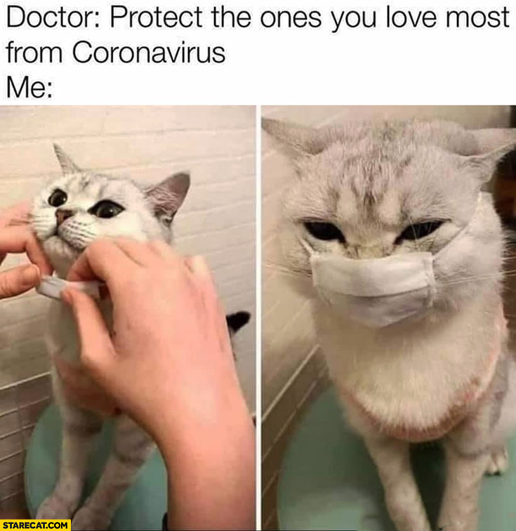 Doctor protect the ones you love most from coronavirus, me: putting facemask on my cat