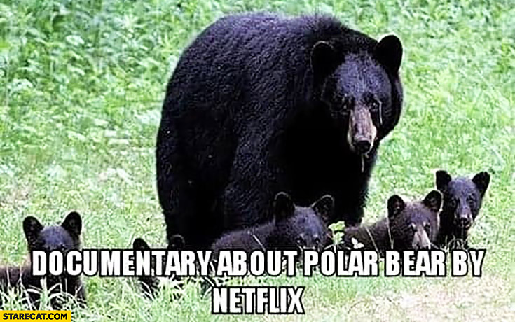Documentary about polar bears by Netflix black bears