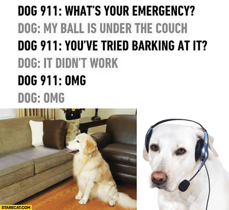 Dog 911: what's your emergency? My ball is under the couch. You've tried barking at it? It didn't work. OMG OMG