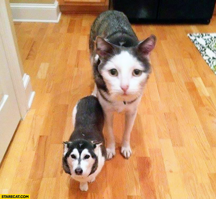 Dog and cat face swap