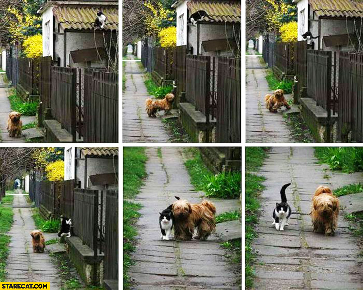 Dog cat going for a walk together every morning