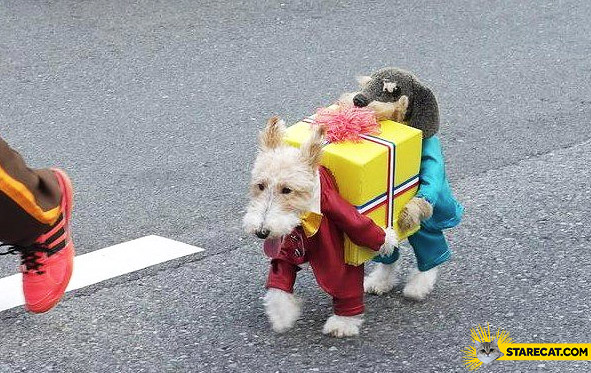 Dog costume two dogs carrying a gift