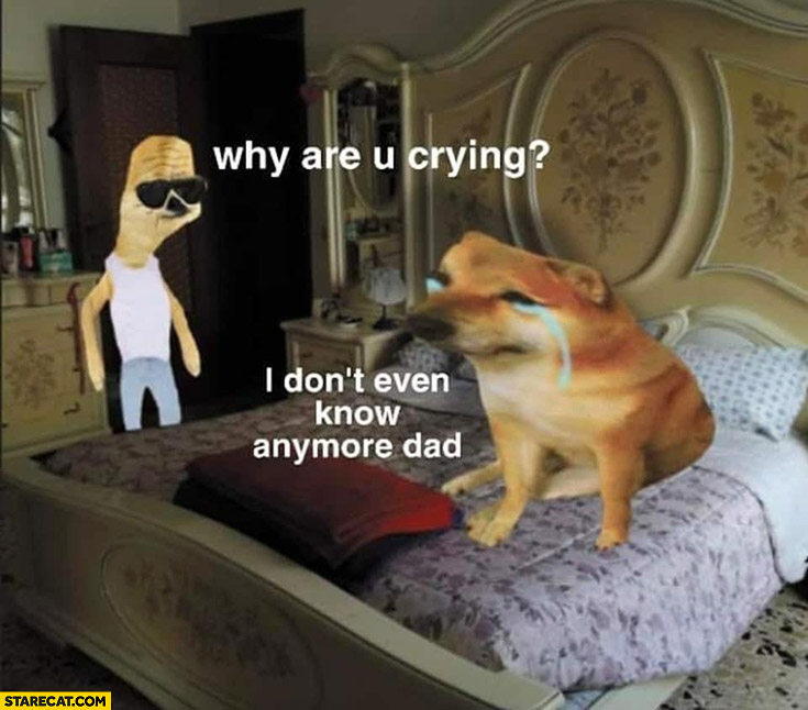 Dog doge shy are you crying I don't even know anymore dad
