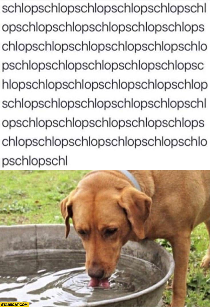 Dog drinking water schlop schlop